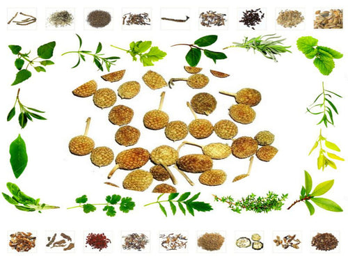 100% Organic Raw Herb Gorakhmundi - Sphaeranthus Indicus Pure And Natural Ayurvedic Jadi Buti Available at BuyIndianProducts24x7.com