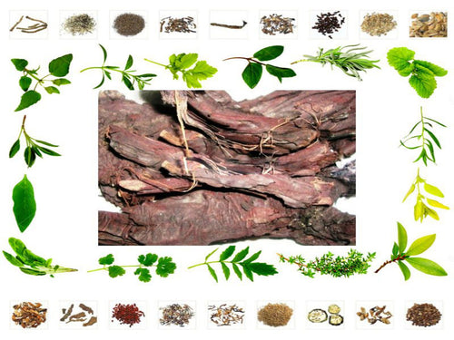100% Organic Raw Herb Babul Chaal - Vachellia nilotica Bark Pure And Natural Ayurvedic Jadi Buti Available at BuyIndianProducts24x7.com