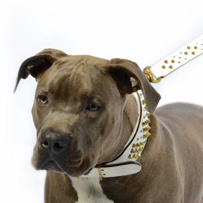 Dog Collar - ROGUE | ICED OUT