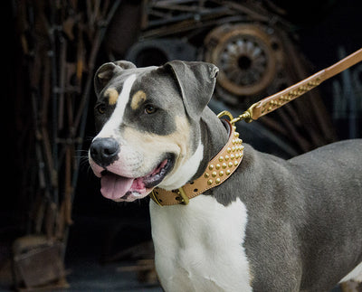 "Dog Collar - Tan Leather & Brass ""Ruthless"""