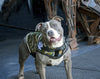 Rogue Royalty Canine Weight Vest - Camo