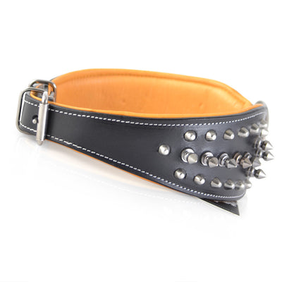 Studded Dog Collar Cobra Nape