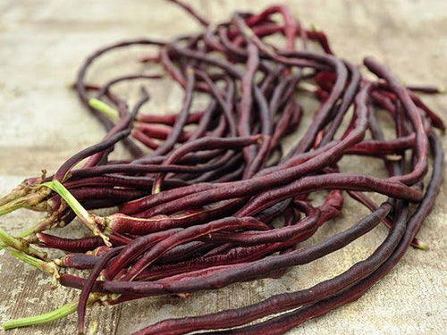 PURPLE  OR GREEN SNAKE BEANS X 15 SEEDS
