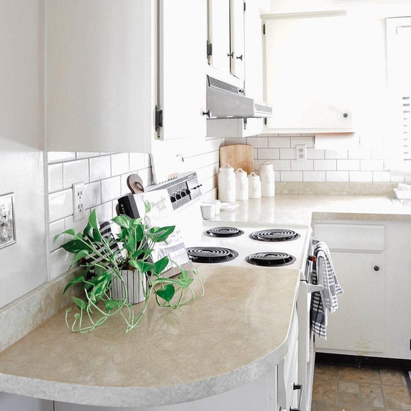 Sicilian Sand Countertop with Plant