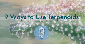 9 Ways to Use Terpenoids
