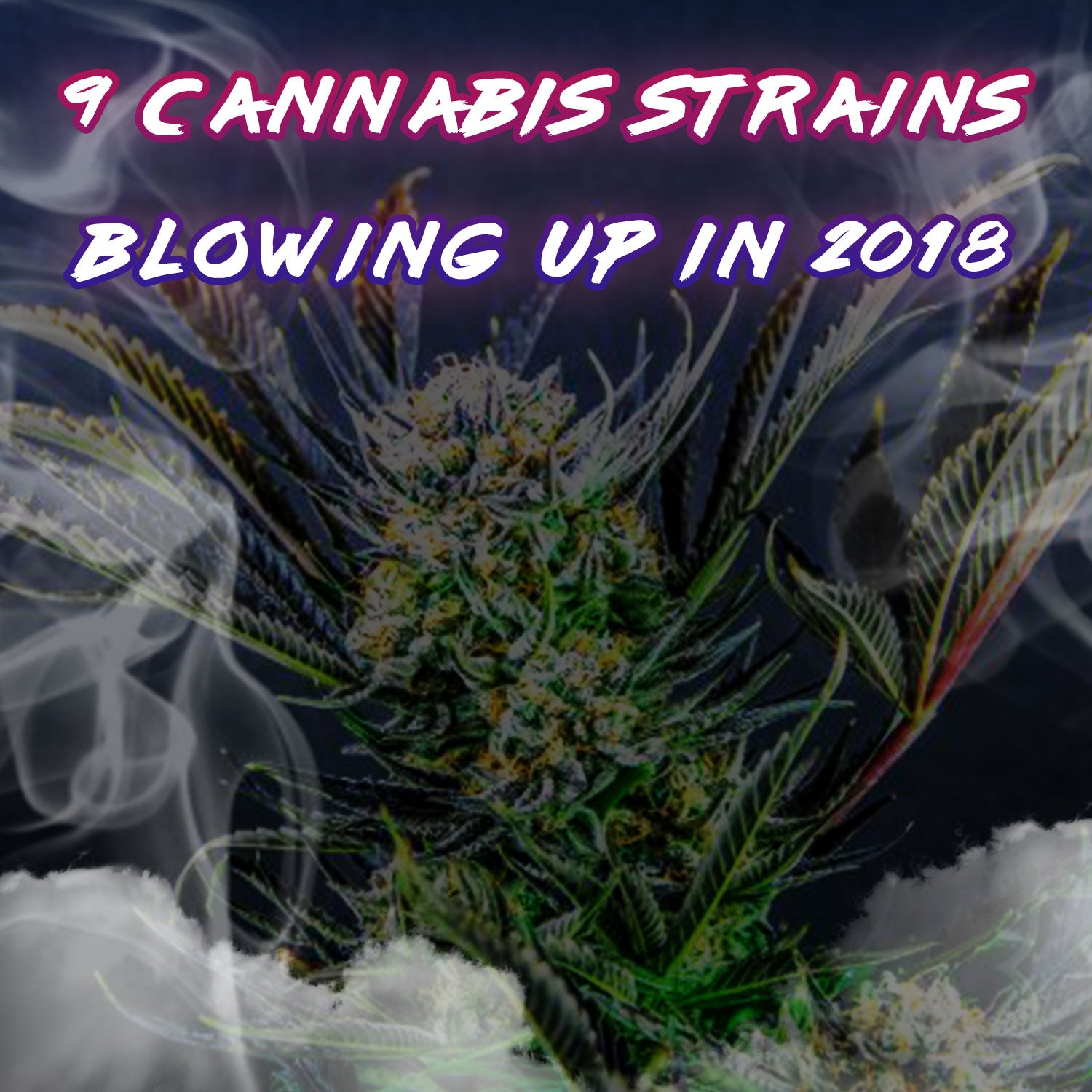 9 Cannabis Strains Blowing Up In 2018 - KLOUD9