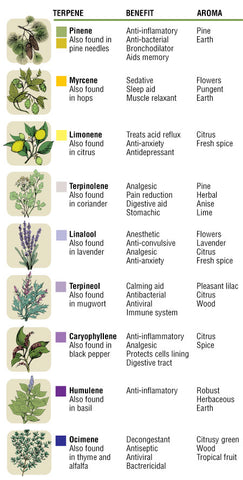 Terpenes terpenoids how to use what are cannabis