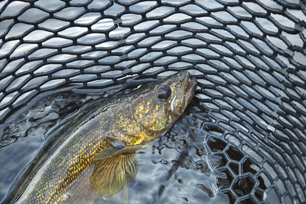 Some Summer Walleye Tactics Will Catch More Fish