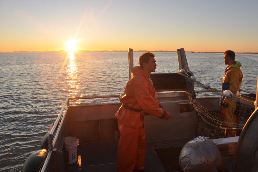 Surrender Salmon: Bringing Bristol Bay's Finest to Your Front Door