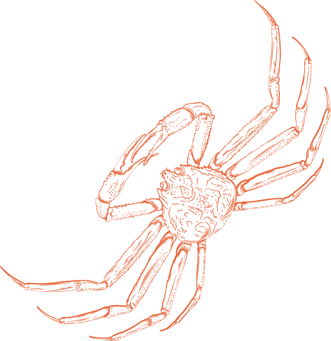 illustration of a king crab