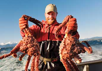 Man holding two large Alaskan King Crabs