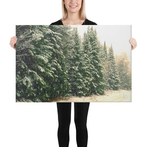 Canvas: Winter Pines