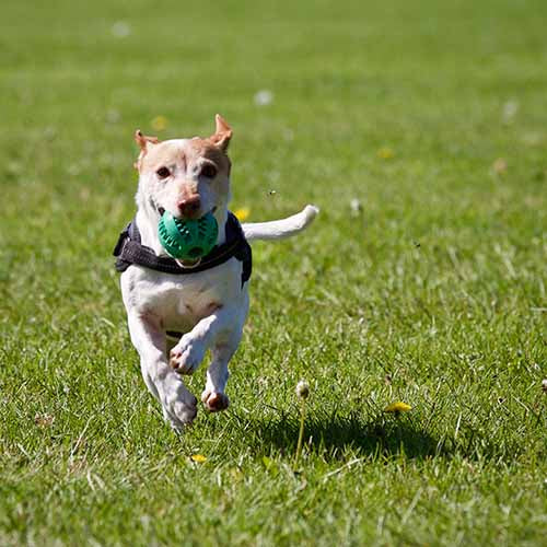 Dog Mobility: Agility to Aging