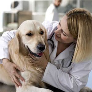 Finding the Right Dog Cancer Treatment