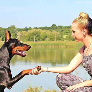 Dog Socialization: It Starts With YOU