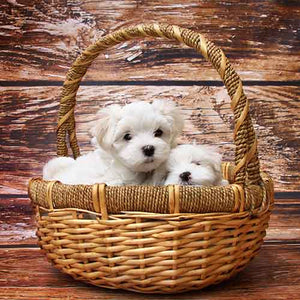What to Know About Bringing Home a New Puppy