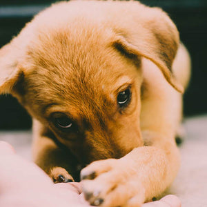 Puppy Health: Prevention, Care and Longevity