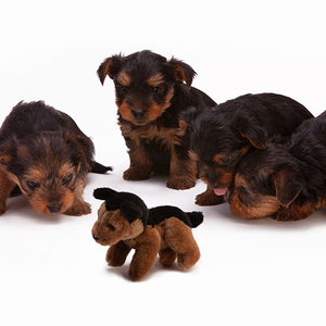 Puppy Socialization & Training Tips