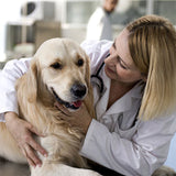 Alternative Dog Cancer Treatments