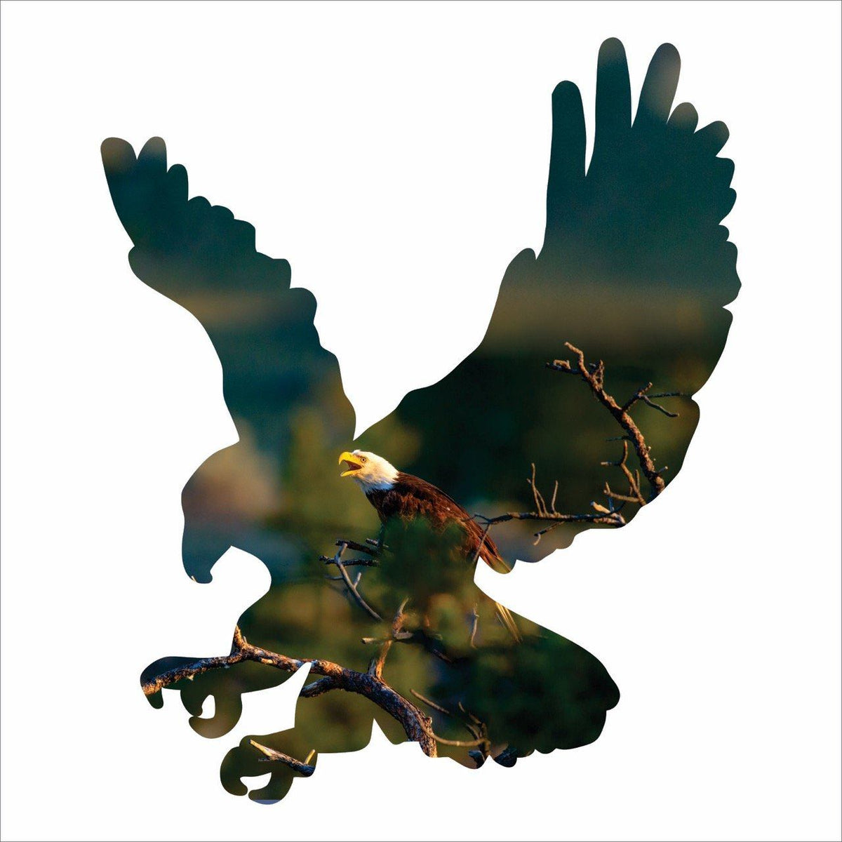 Home Decor - Metal Eagle Silhouette Imagery Sign