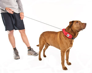 dog collar + leash in one, leash extended