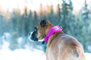 Fuchsia | Release N Run Dog Collar with Retractable Leash Built-In