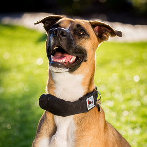 Black | Release N Run Dog Collar with Retractable Leash Built-In