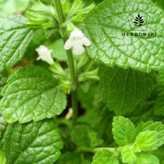 Herbal Profile: Melissa Officinalis (Lemon Balm)