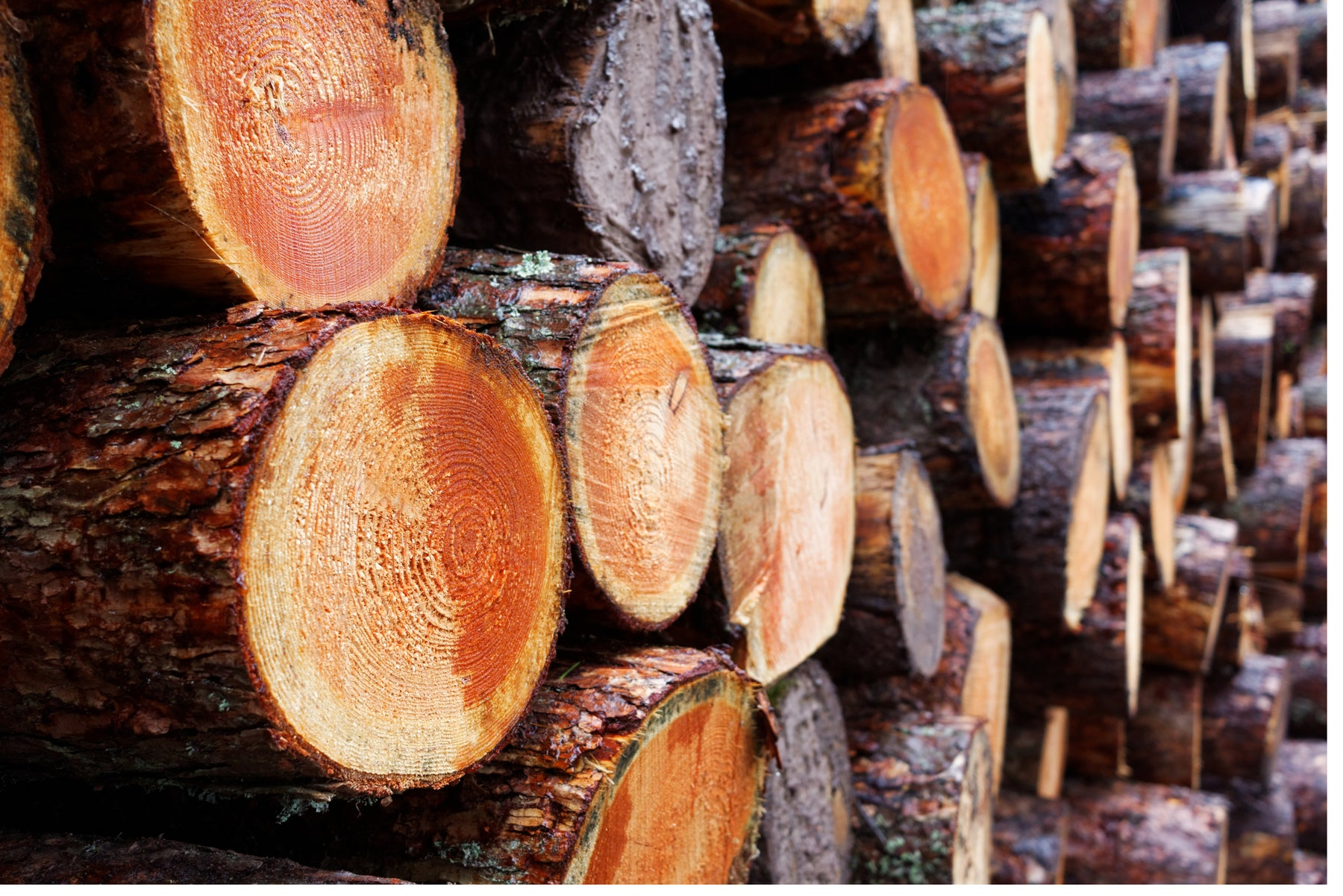 What is FSC Timber