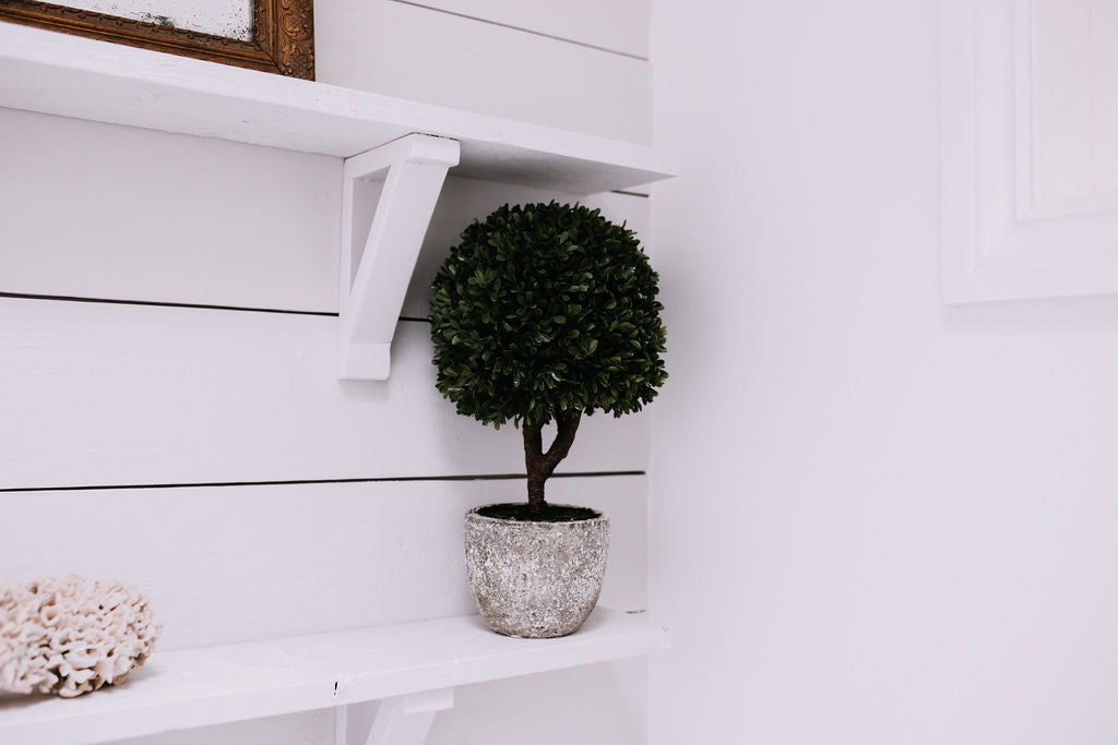 Boxwood Topiary Tree in Stone Pot