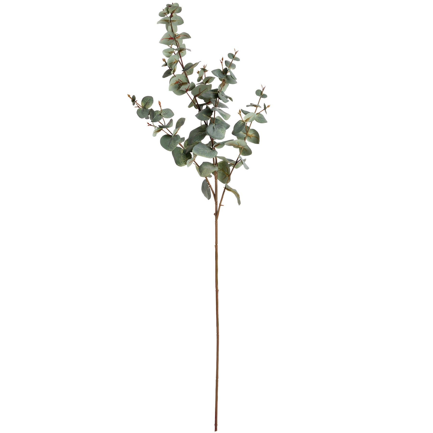 Variegated Eucalyptus Spray