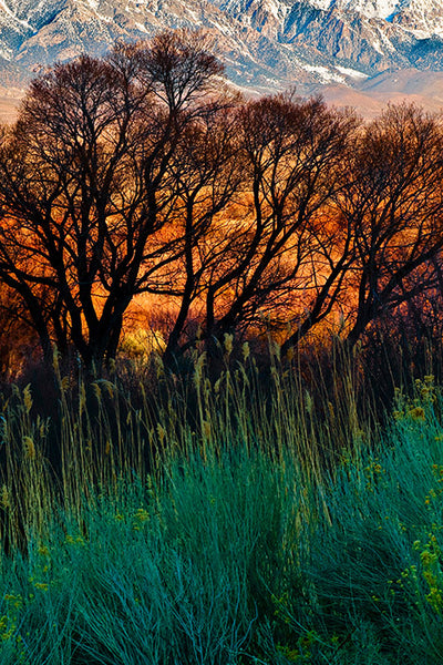 Fine Art Print Fiery Fields James K Watson Photography