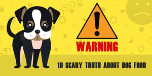 10 Scary Truths About Dog Food