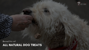Benefits of All Natural Dog Treats