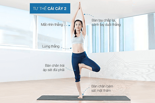 tu-the-cai-cay-yoga-co-ban-cho-nguoi-moi-bat-dau