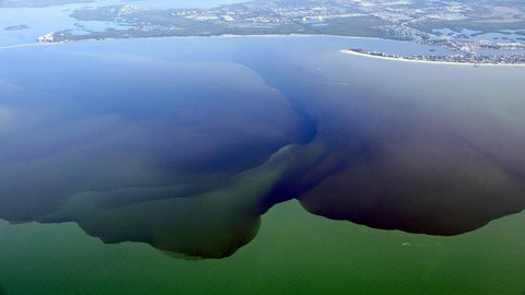 Toxic algae blooming in local Florida waterways causes state of emergency in four of the state's coastal counties.