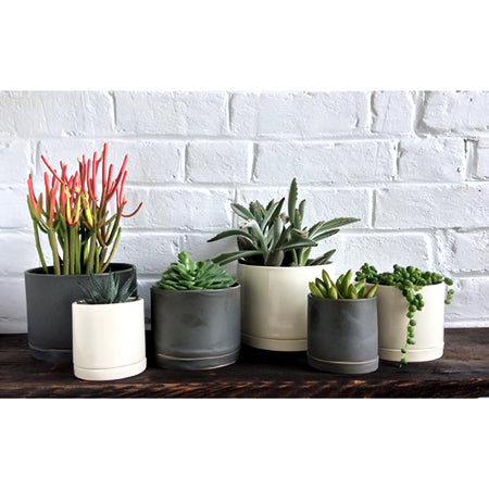 White Medium Round Ceramic Planter