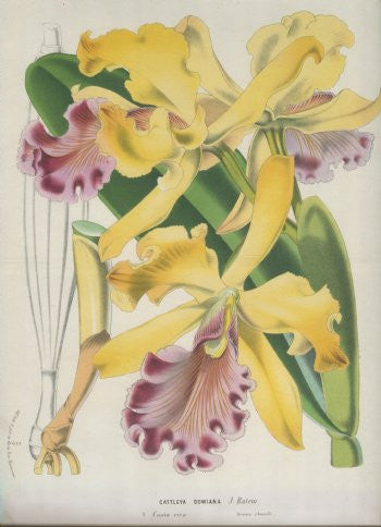 22593-orchid-1880s-195_296_detail