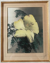 1920's Vintage Hand Colored Photograph By Williams 'Yellow Hibiscus'