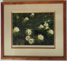 1940's Vintage Hand Colored Photo By Edithe Beutler 'Night-Blooming Cereus'