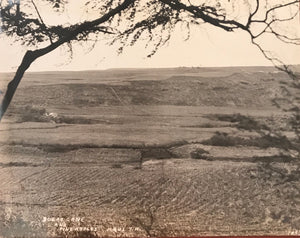 1910 Vintage Photograph of Sugar Cane And Pineapple Fields in Maui Hawaii