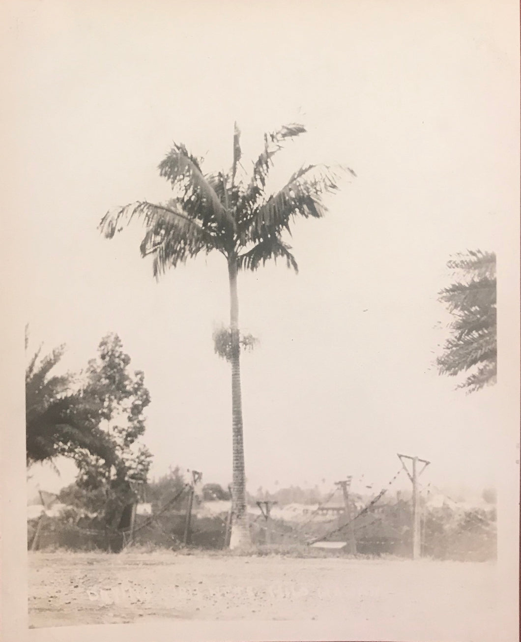 1923 Vintage Photograph of Puna Hawaii