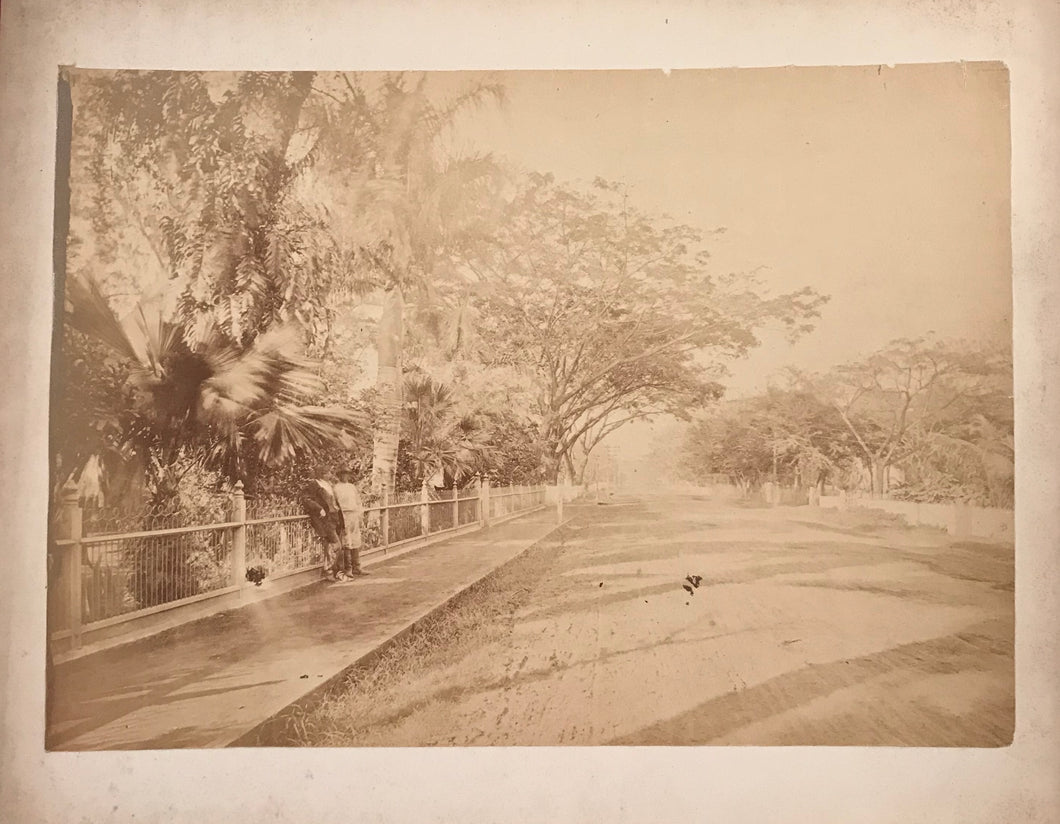 1885 Vintage Photograph By Chase Of Nuuanu Avenue Oahu Hawaii