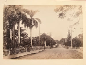 1893 Vintage Photograph Of Nuuanu Avenue By Chase