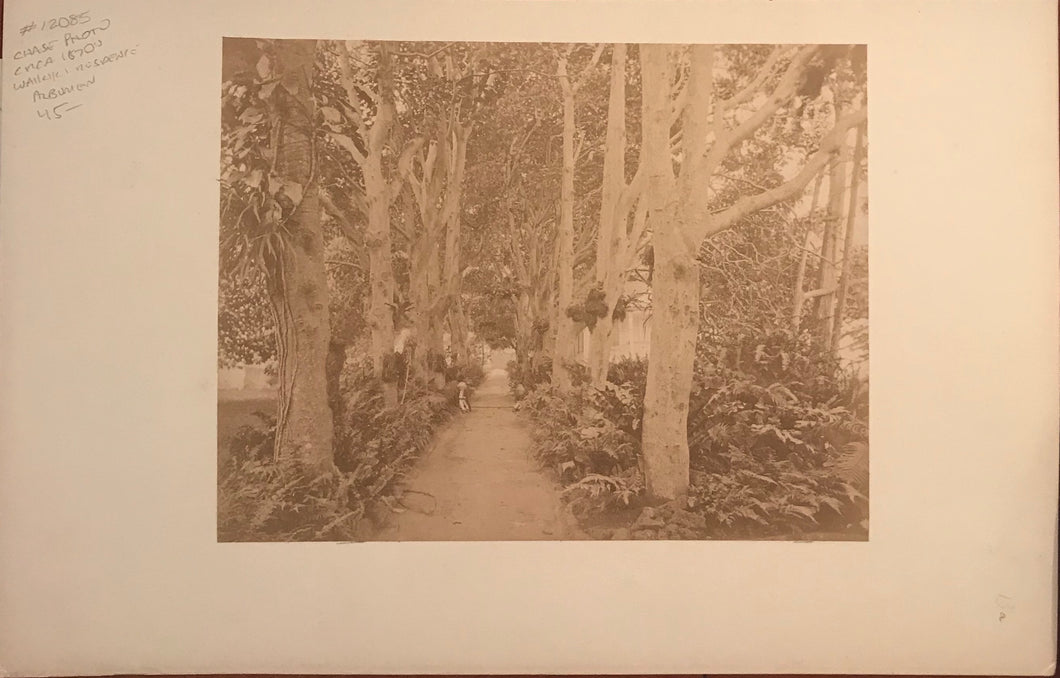 1870's Vintage Photograph By Chase Of A Waikiki Residence