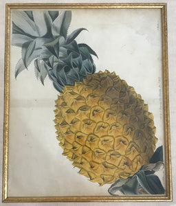 1827 Original Hand Colored Print Of A Pineapple Plant