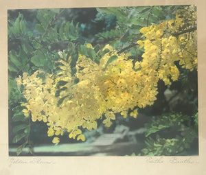 1940's Vintage Hand Colored Photograph By Edithe Beutler 'Golden Shower'