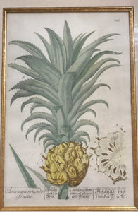 1750 Original Hand Colored Pineapple Engraving