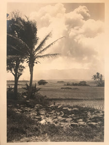 1910's Vintage A. R. Gurrey  Photograph Of Lower Manoa