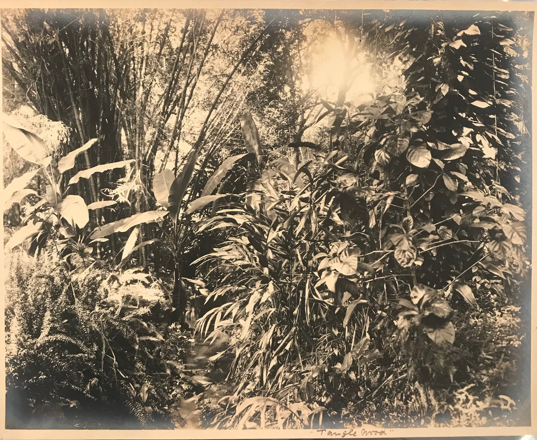 1922 Vintage Photograph By WJ Senda Of Tanglewood In Hawaii